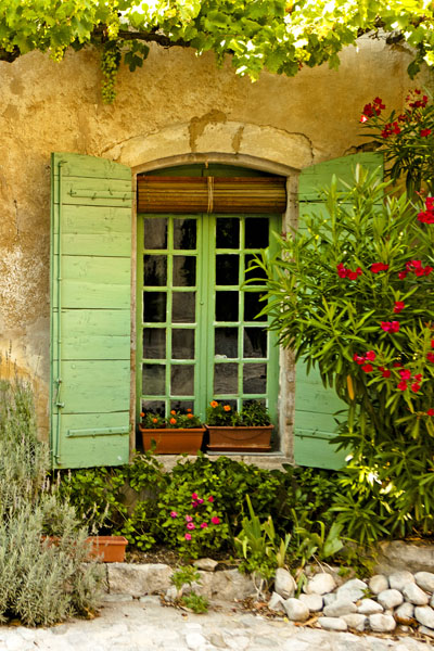 green window with rosemary