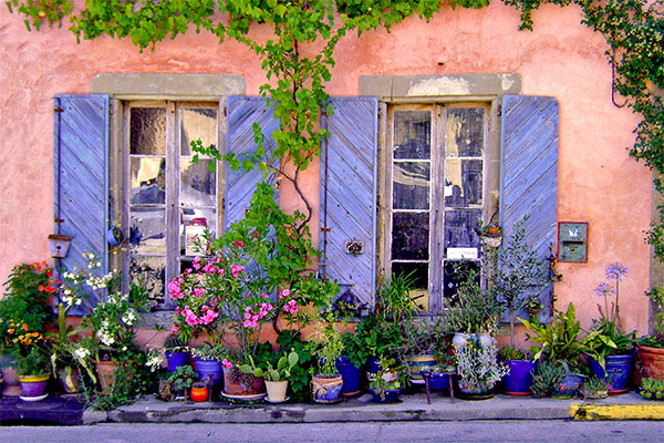 Lavender pots and windows
