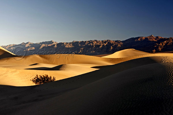 Sand dunes at dawn